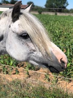 Summer de la cavalerie L'alezane