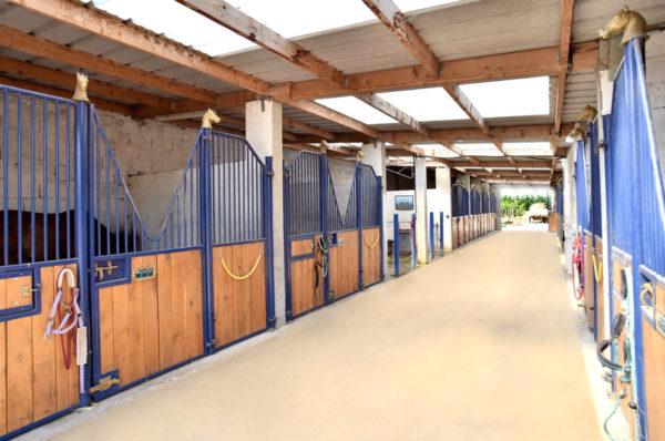pension cheval à Lyon formule Confort - Écuries L'alezane
