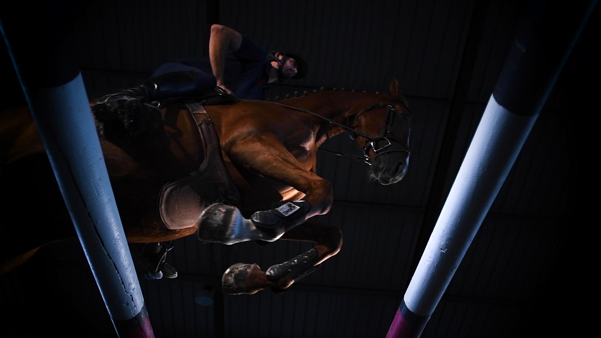 Travail du saut pour nos chevaux pensionnaires